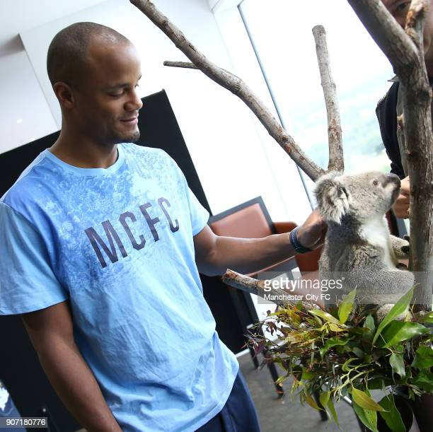 Manchester City Pre Season Tour of Australia Training Session Cbus Super Stadium Manchester City's Vincent Kompany poses with a Koala brought in by...