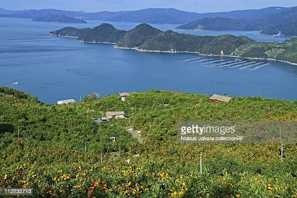 Mandarin Orange Plantation and Uwa Sea