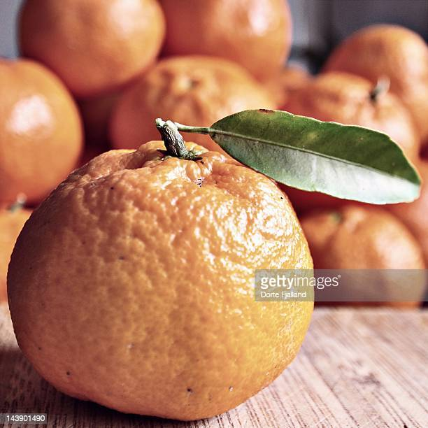 mandarin orange with one green leaf - dorte fjalland stock-fotos und bilder