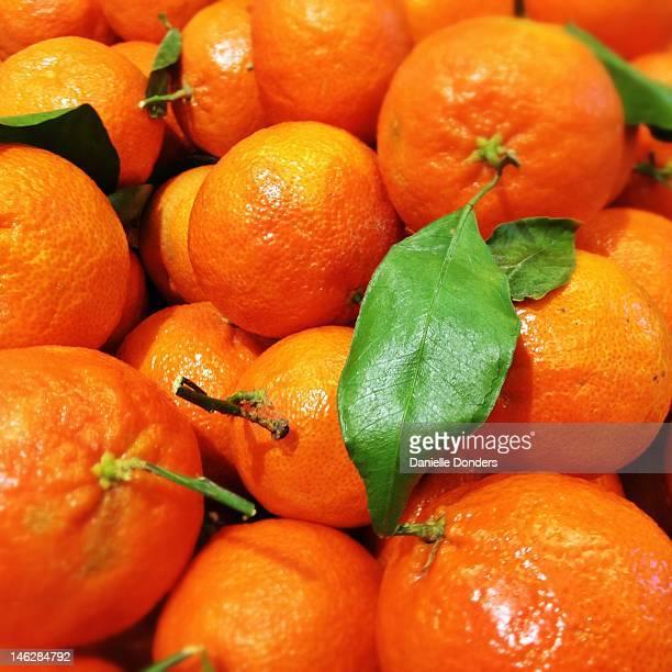 Mandarin oranges with green leaf