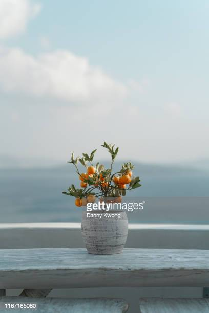 mandarin, santorini, greece - cyclades islands stock pictures, royalty-free photos & images