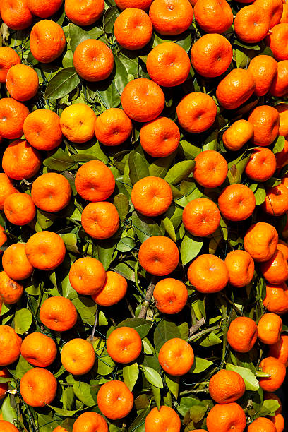 Mandarin tree for sale at Chinese New Year flower market in Victoria Park, Causeway Bay.