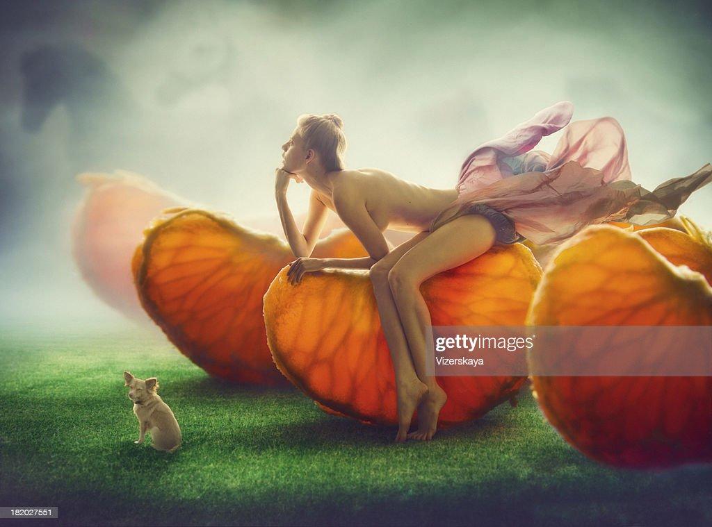 mandarine field : Stock Photo