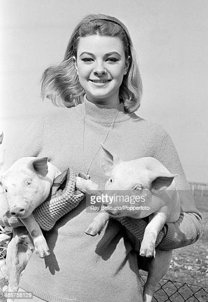 Mandy RiceDavies the British model and showgirl holding two piglets circa 1962