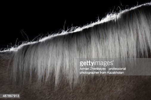 Mane hair of the horse