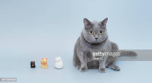 maneki neko with real lucky cat - maneki neko stock photos and pictures