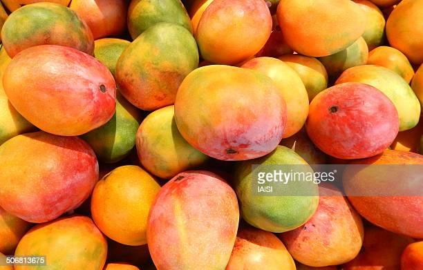 Mango at the market