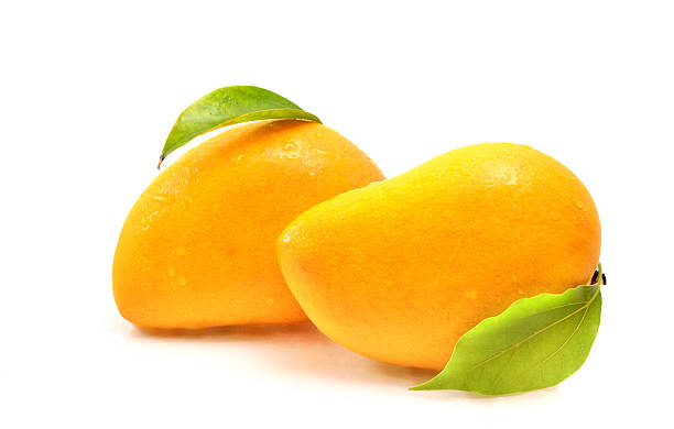 essay of mango fruit