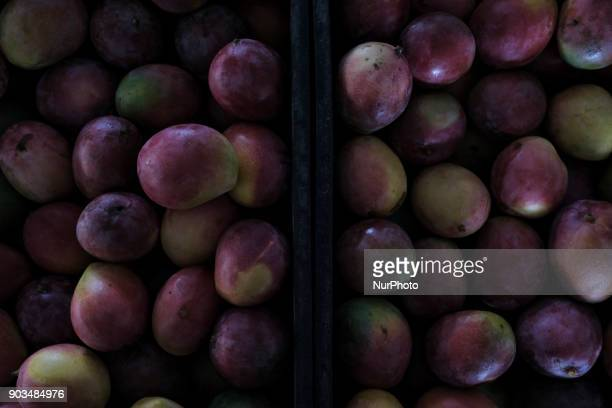 Mangoes are seen to sell at a popular market in the city of Recife Northeast Brazil on January 10 2018 A study by the Department of Agriculture and...