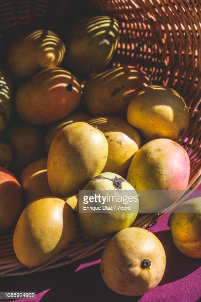 Mangoes in the Queensland Sunshine