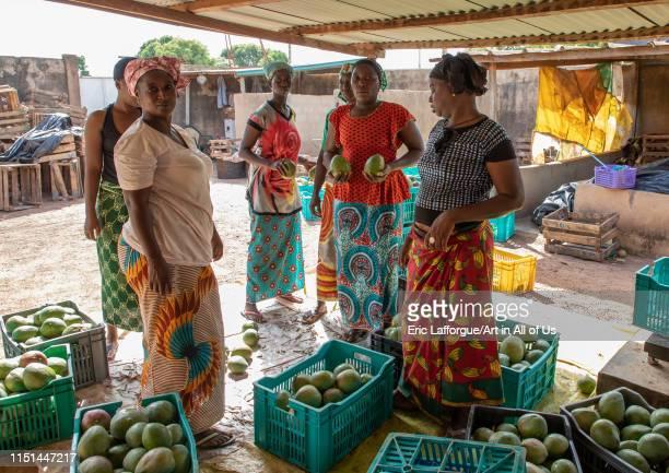 Mangos cooperative, Savanes district, Boundiali, Ivory Coast on May 3, 2019 in Boundiali, Ivory Coast.