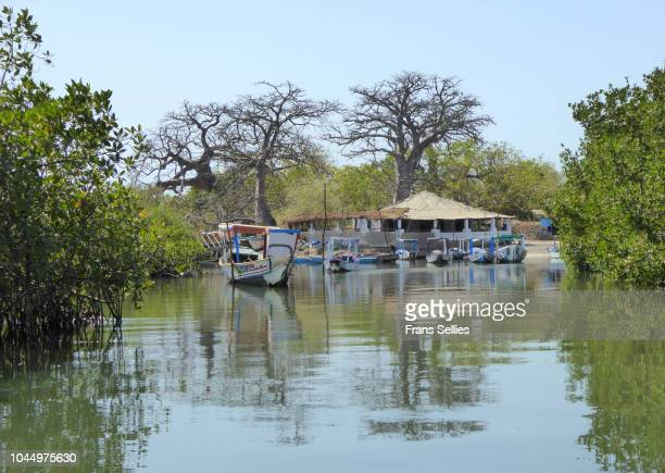 Mangrove area near Lamin, The Gambia
