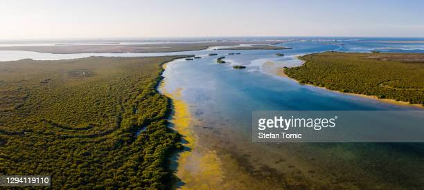mangrove beach and forest in umm al quwain emirate of the uae - abu dhabi stock pictures, royalty-free photos & images
