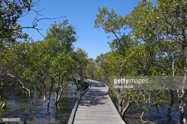 mangrove boardwalk, coffs harbour, new south wales, australia - coffs harbour stock pictures, royalty-free photos & images