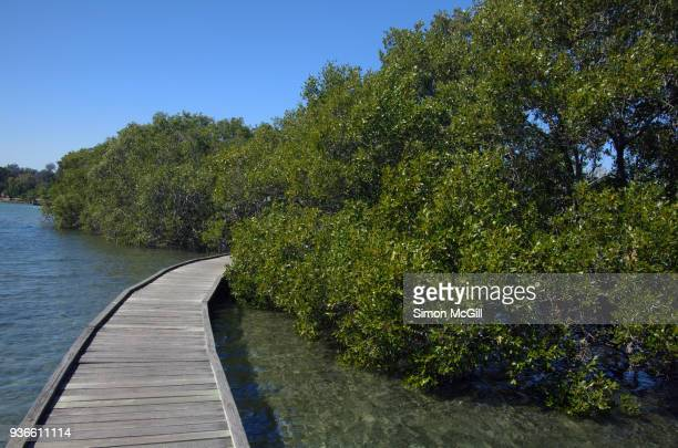 Mangrove Boardwalk, Coffs Harbour, New South Wales, Australia