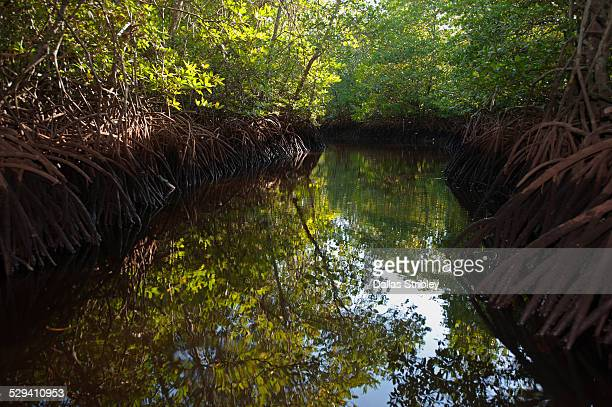Mangrove canal on Nusa Lembongan, Bali