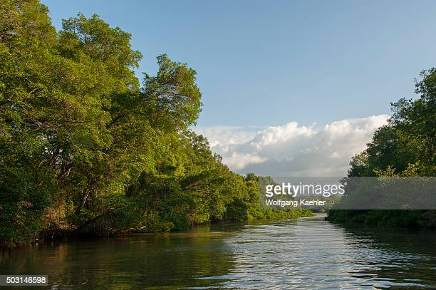 A mangrove forest along the Tárcoles River also called the Grande de Tárcoles River or the Río Grande de Tarcoles in Costa Rica