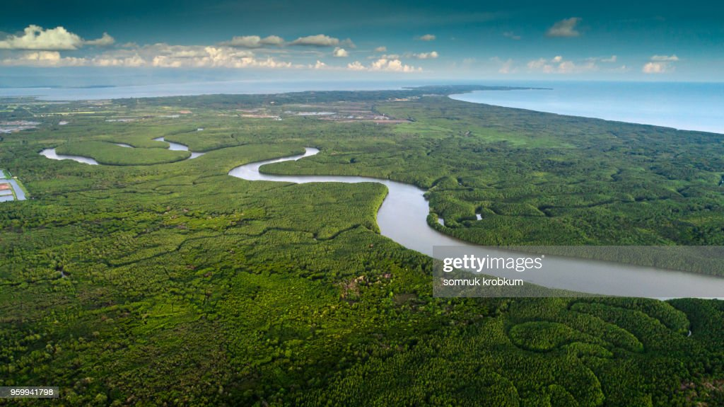 Mangrove  forest  and river : Stock Photo