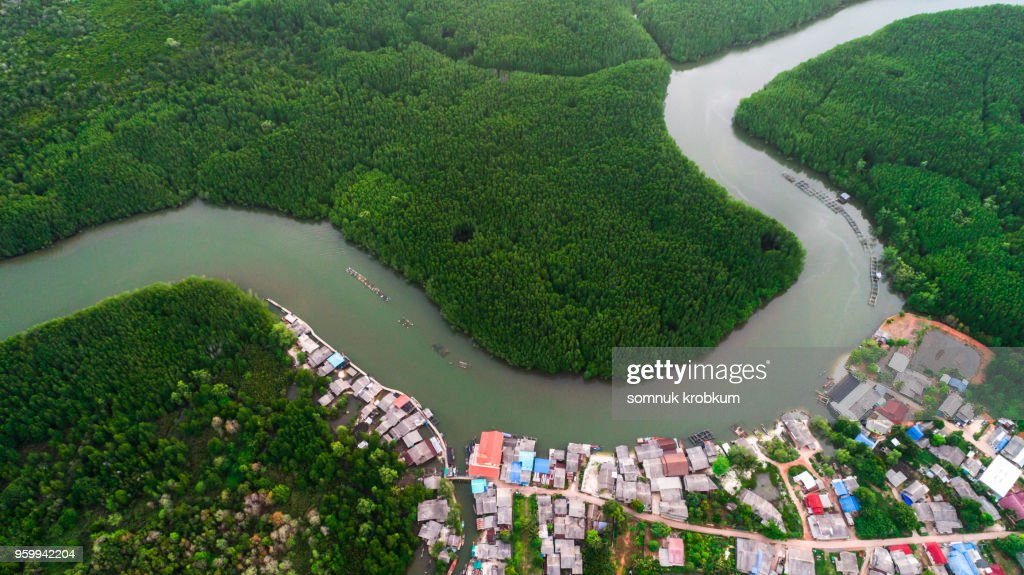 Mangrove  forest  and river : Stock-Foto