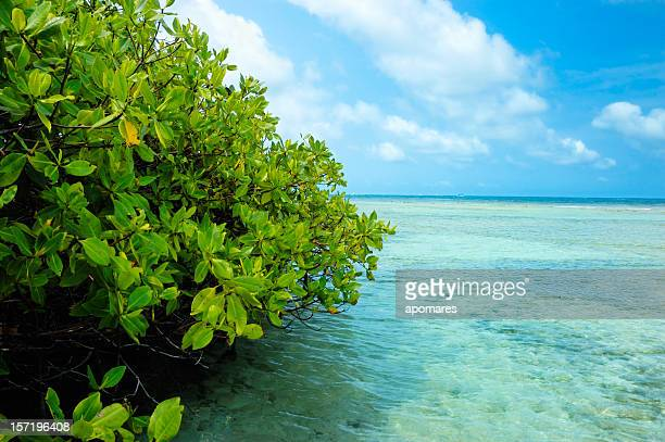 mangrove forest and shallow waters in a tropical island - mangrove tree stock pictures, royalty-free photos & images