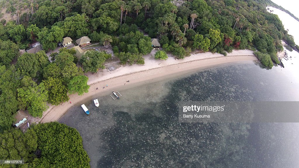 Mangrove Forest at Alas Purwo National Park : Stock Photo
