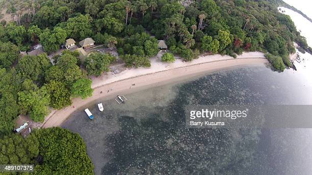 mangrove forest at alas purwo national park - east java province stock photos and pictures