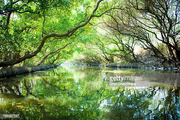 Mangrove green shade tunnel