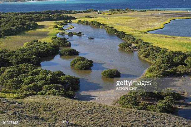 mangrove - fstoplight stock photos and pictures
