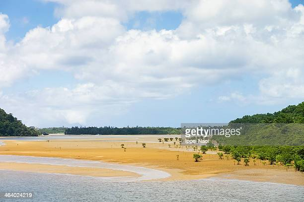 mangrove river at low tide, iriomote-jima, japan - ippei naoi stock photos and pictures