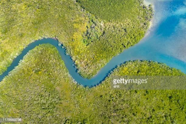 mangrove river delta, queensland, australië - broek stockfoto's en -beelden