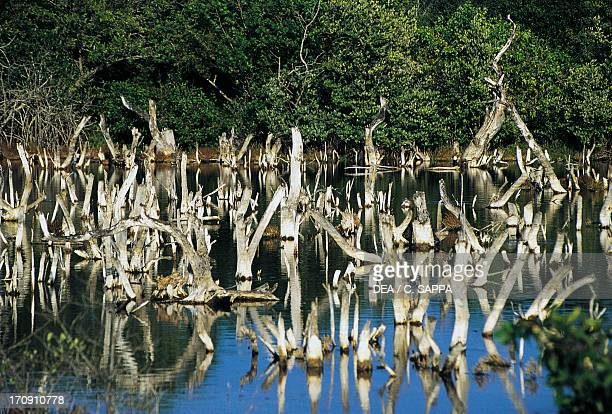 Mangrove Sian Ka'an Biosphere Reserve Quintana Roo Mexico