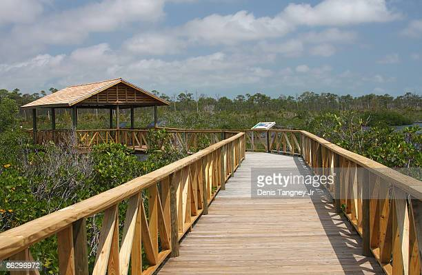 mangrove swamp  - lucayan national park stock photos and pictures