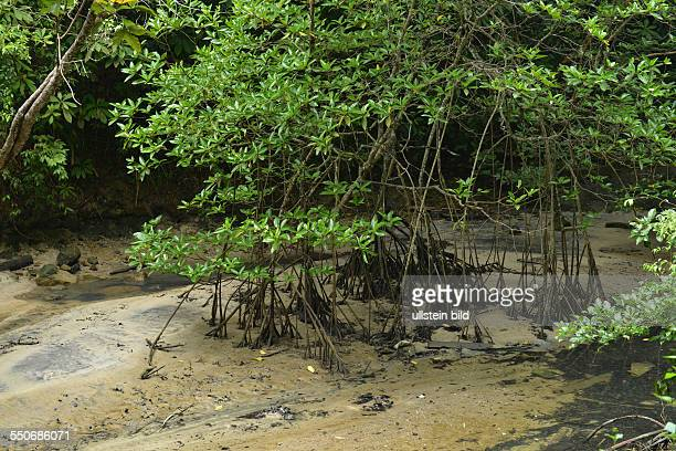 Mangroven Taman Negara Nationalpark Penang Malaysia