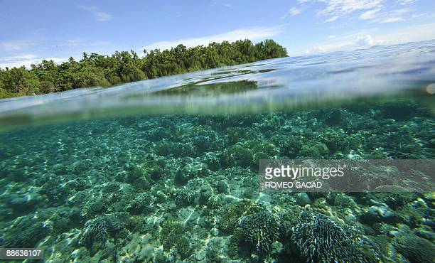 Mangroves and coral reef grow off Bunaken Island national marine park in northern Sulawesi on May 14 2009 The tiny island is a marine protected area...