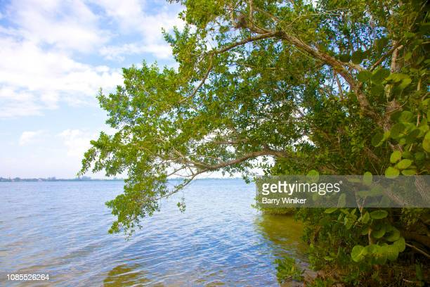60 Top Englewood Florida Pictures, Photos, & Images - Getty