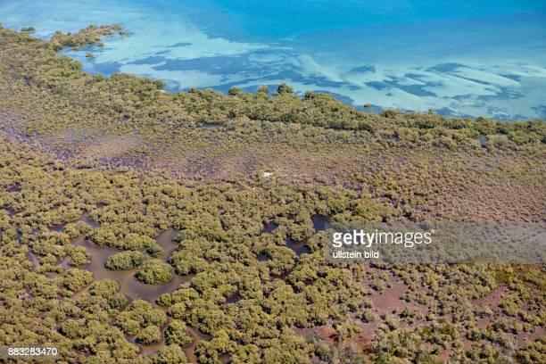 Mangroves at Moreton Island Brisbane Australia