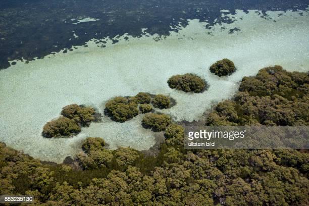 Mangroves at Stradbroke Island Moreton Bay Brisbane Australia