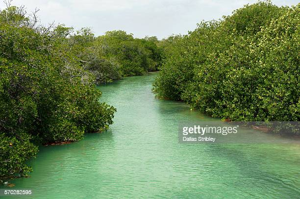 mangroves in the sian ka'an biosphere - sian ka'an biosphere reserve stock photos and pictures