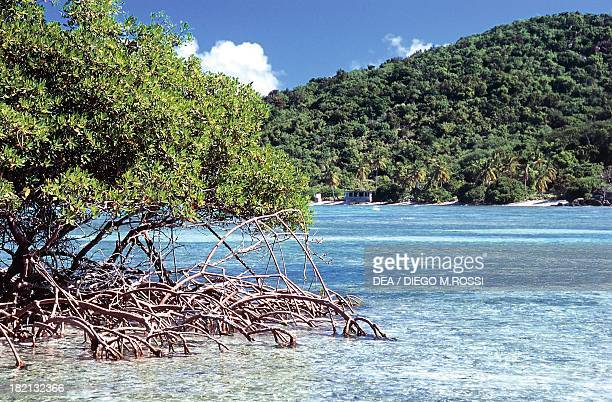 Mangroves Long Bay Jost Van Dyke British Virgin Islands United Kingdom