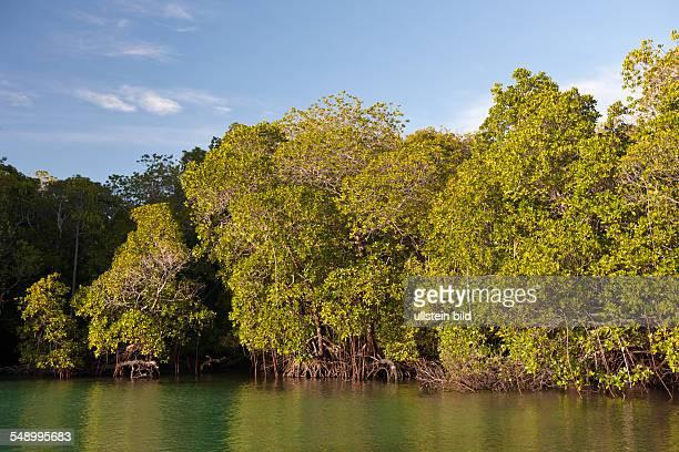 Mangroves of Misool, Raja Ampat, West Papua, Indonesia
