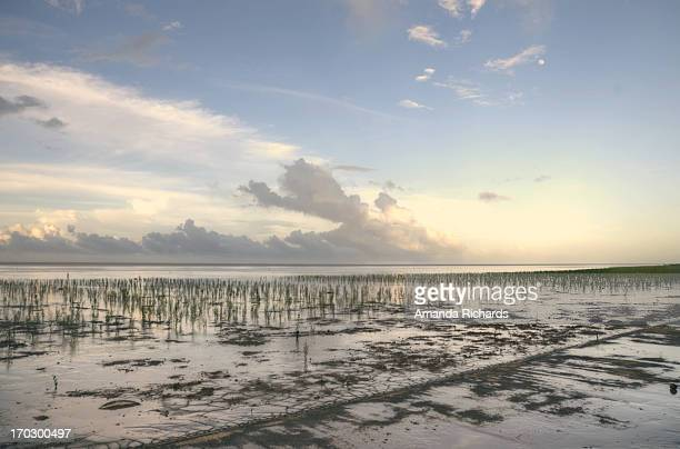 mangroves - guyana stock pictures, royalty-free photos & images