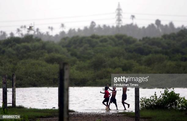 Mangroves Water Scarcity and Electricity Scarcity in a adivasi village in Malad