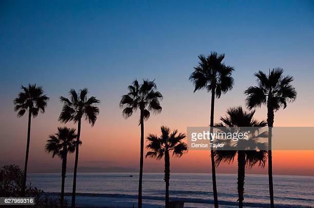 Manhattan Beach palms