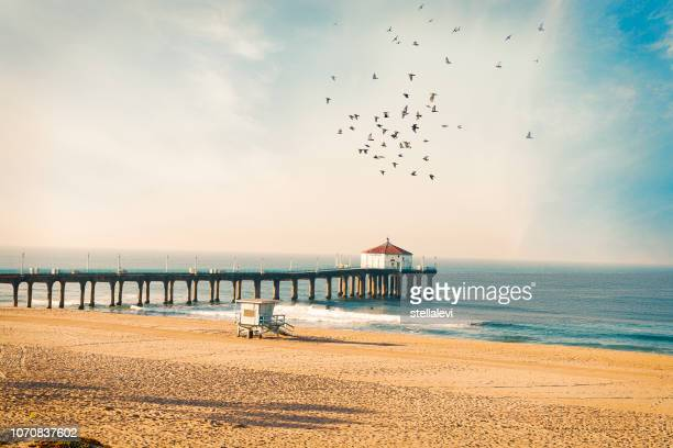 manhattan beach pier with birds - la beach stock pictures, royalty-free photos & images