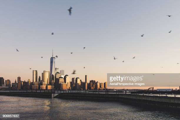 Manhattan Skyline and Seagull at Sunset