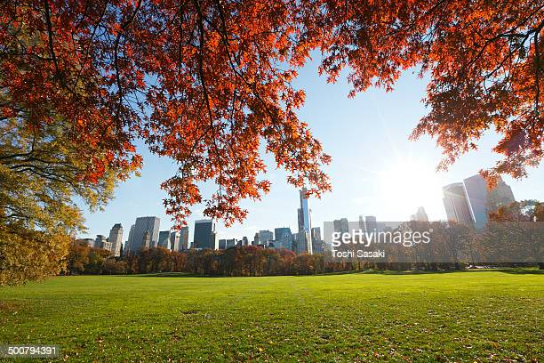 Manhattan skyscrapers behind autumn color leaves