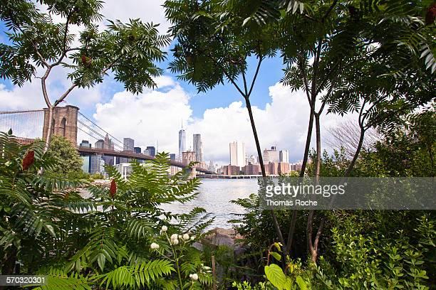 manhattan through the foliage - brooklyn bridge park stock-fotos und bilder