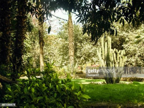 manial palace garden - hussein52 stock photos and pictures