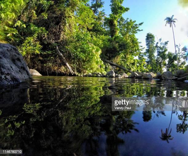 manicou river reflection - dominica fotografías e imágenes de stock