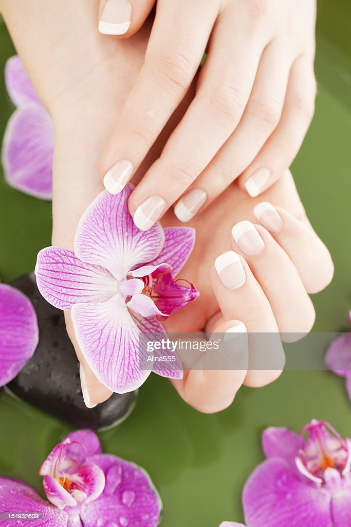 Manicure: beautiful female hands holding an orchid : Stock Photo